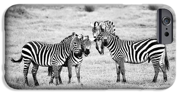 Fun Photographs iPhone Cases - Zebras in Black and White iPhone Case by Sebastian Musial