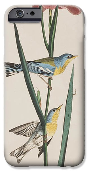 Botanical Drawings iPhone Cases -  Blue Yellow-backed Warbler iPhone Case by John James Audubon