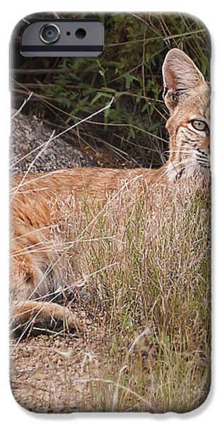Bobcat at Rest iPhone Case by Alan Toepfer