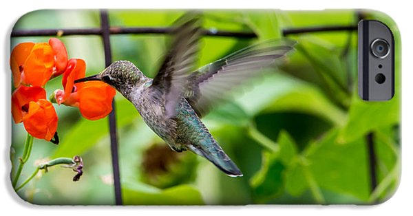 Animals Photographs iPhone Cases -  Broad-tailed Hummingbird 2 - Utah iPhone Case by Gary Whitton