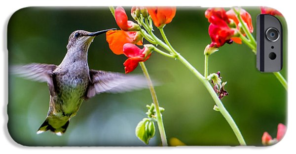Animals Photographs iPhone Cases -  Broad-tailed Hummingbird 4 - Utah iPhone Case by Gary Whitton