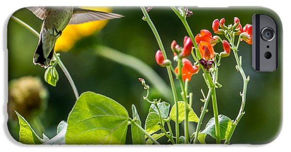Animals Photographs iPhone Cases -  Broad-tailed Hummingbird - Utah iPhone Case by Gary Whitton