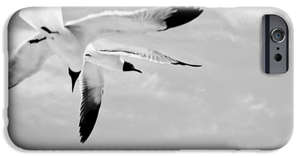 Flying Seagull iPhone Cases -  Chaos - Seagulls Black and White iPhone Case by Colleen Kammerer