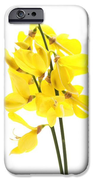 Cut-outs iPhone Cases -  Common broom iPhone Case by Fabrizio Troiani