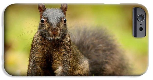 Sciurus Carolinensis iPhone Cases -  Curious Black Squirrel iPhone Case by Mircea Costina Photography