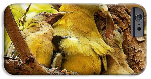 Baby Bird iPhone Cases -  Feeding Time iPhone Case by Shivani Karki