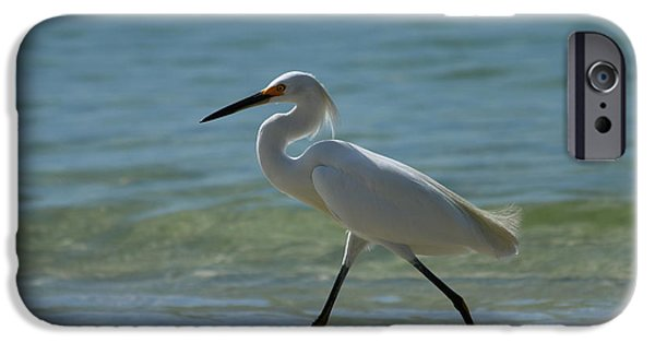 Sea Birds iPhone Cases -  In A Great Hurry iPhone Case by Christiane Schulze Art And Photography