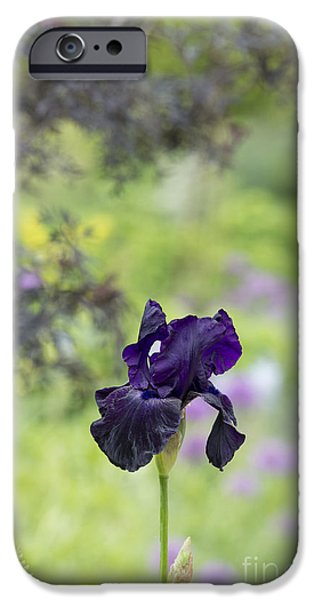 Anther iPhone Cases -  Iris Licorice Stick iPhone Case by Tim Gainey
