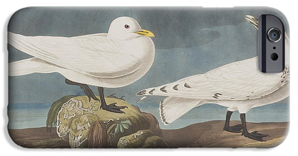 Seagull iPhone Cases -  Ivory Gull iPhone Case by John James Audubon
