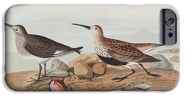Recently Sold -  - Red Rock iPhone Cases -  Red backed Sandpiper iPhone Case by John James Audubon