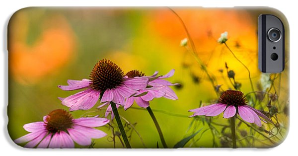iPhone Cases - Coneflower Symphony iPhone Case by Mary Amerman