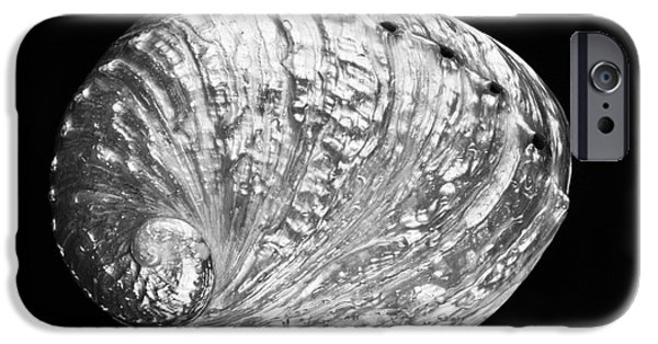 Abalones iPhone Cases - Abalone Shell - BW iPhone Case by Bill Brennan - Printscapes