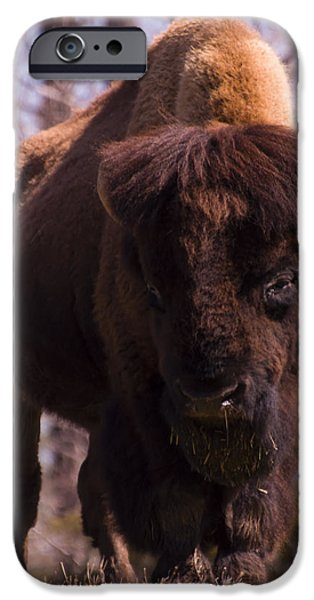 American Bison iPhone Cases - American Bison iPhone Case by Chris Flees