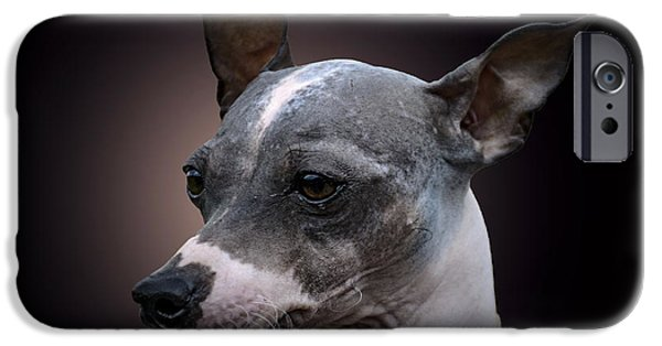 Dogs iPhone Cases - American HairlessTerrier  iPhone Case by Alexey Bazhan