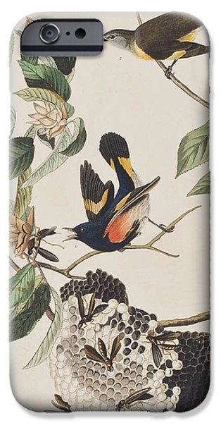 Insects Drawings iPhone Cases - American Redstart  iPhone Case by John James Audubon