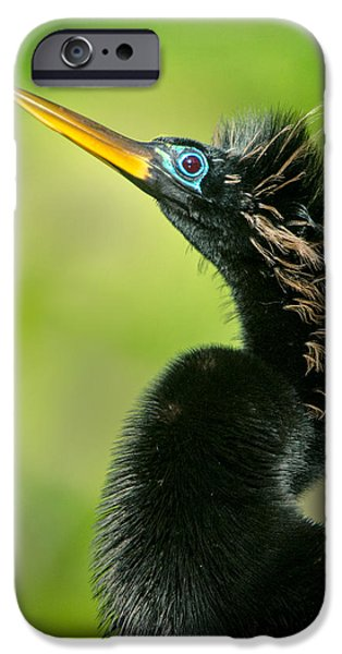 Anhinga iPhone Cases - Anhinga Anhinga Anhinga, Tortuguero iPhone Case by Panoramic Images