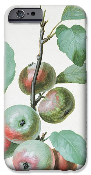 Flora Drawings iPhone Cases - Apples iPhone Case by Pierre Joseph Redoute