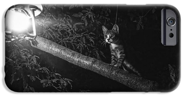 Cat Reflection iPhone Cases - Attracted to the Light iPhone Case by Travel Coffee Book