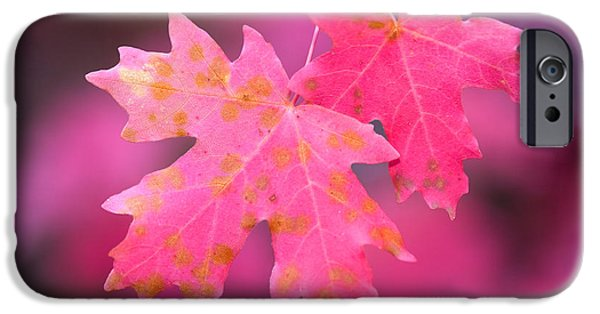 Selective Focus iPhone Cases - Autumn Color Maple Tree Leaves iPhone Case by Panoramic Images