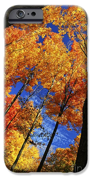 Autumn iPhone Cases - Autumn forest iPhone Case by Elena Elisseeva