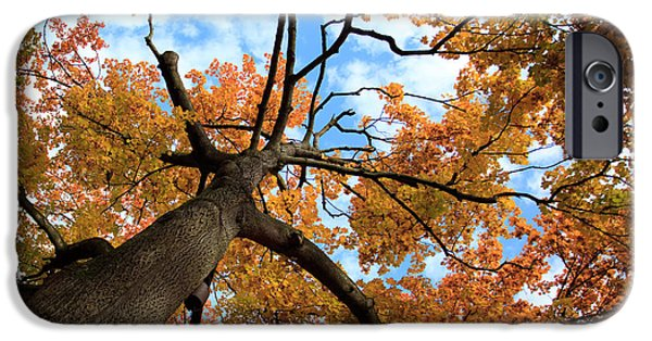 Autumn Trees iPhone Cases - Autumn Tree iPhone Case by Nailia Schwarz