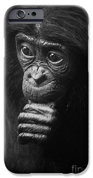 Fauna iPhone Cases - Baby Bonobo Portrait iPhone Case by Helga Koehrer-Wagner