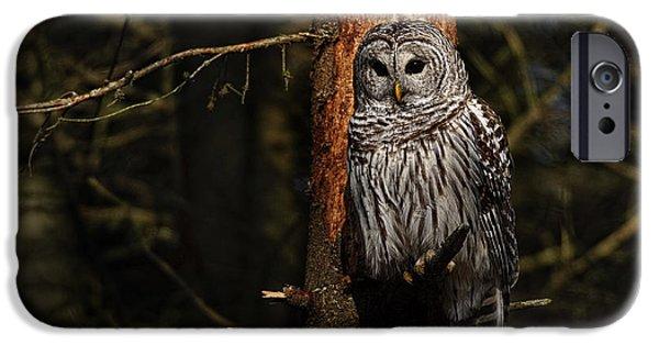 Michael Cummings Mixed Media iPhone Cases - Barred Owl in Pine Tree iPhone Case by Michael Cummings