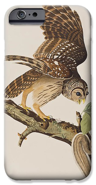 Colored Owls iPhone Cases - Barred Owl iPhone Case by John James Audubon