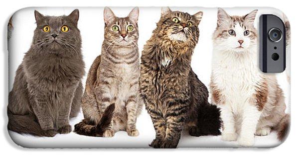 Domestic Short Hair Cat iPhone Cases - Beautiful Grey Domestic Shorthair Cat Laying iPhone Case by Susan  Schmitz