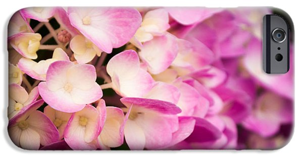 Purple Hydrangeas iPhone Cases - Beautiful Pinks iPhone Case by Parker Cunningham