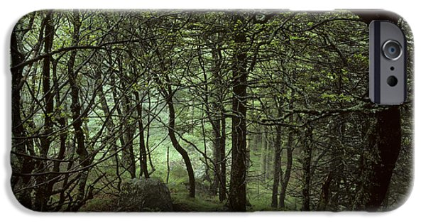 Creepy iPhone Cases - Beech Forest, France iPhone Case by Jean-Louis Klein & Marie-Luce Hubert