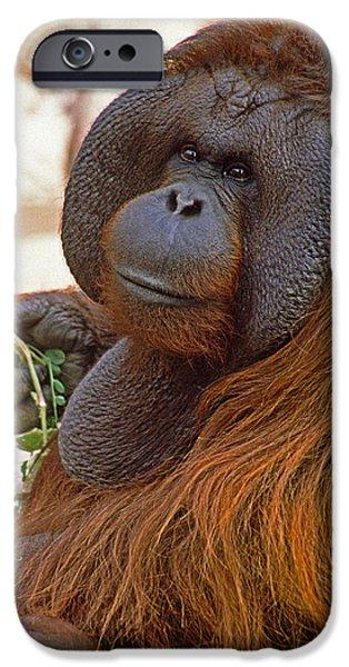 Orangutan iPhone Cases - Big Daddy iPhone Case by Michele Burgess