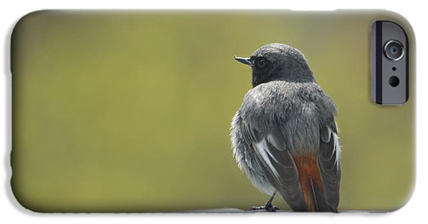 Animal Picture iPhone Cases - Bird In Spring iPhone Case by Heike Hultsch