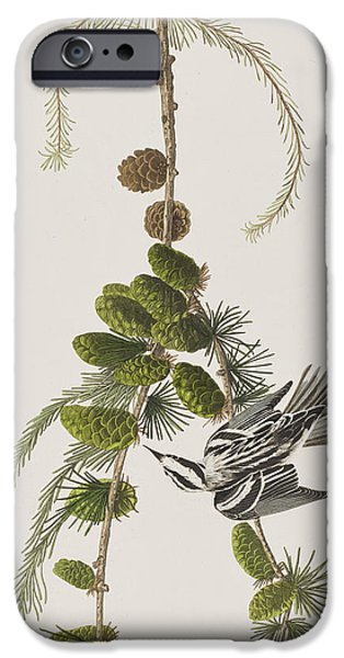 Pines Drawings iPhone Cases - Black And White Creeper iPhone Case by John James Audubon