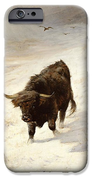 Bison iPhone Cases - Black Beast Wanderer iPhone Case by Joseph Denovan Adam
