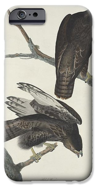 Drawing Of Eagle iPhone Cases - Black Warrior iPhone Case by John James Audubon
