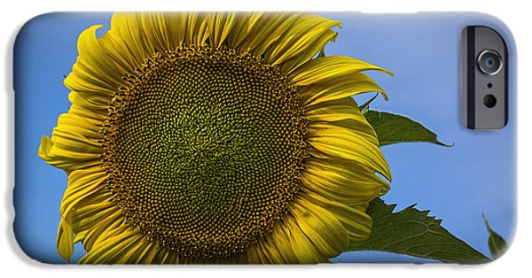 Crops iPhone Cases - Blowing In The Wind iPhone Case by Janice Rae Pariza