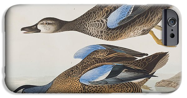 Flight Drawings iPhone Cases - Blue Winged Teal iPhone Case by John James Audubon