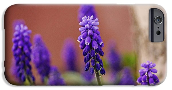 Floral Art iPhone Cases - Bluebell iPhone Case by Gloria Pasko