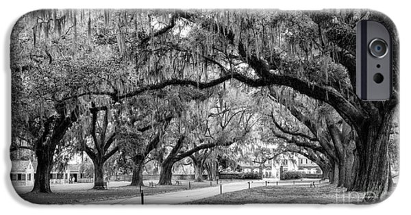 The White House Photographs iPhone Cases - Boone Hall Plantation Avenue of Oaks Mount Pleasant South Carolina iPhone Case by Dawna  Moore Photography