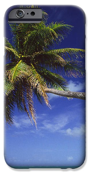 Bora Bora, Palm Tree iPhone Case by Ron Dahlquist - Printscapes