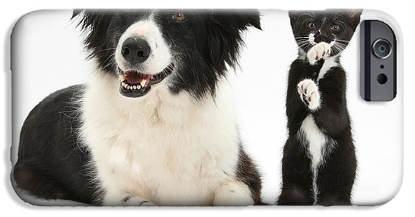 Domesticated Animals iPhone Cases - Border Collie And Tuxedo Kitten iPhone Case by Mark Taylor