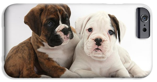 Domesticated Animals iPhone Cases - Boxer Puppies iPhone Case by Mark Taylor