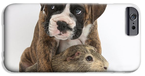 House Pet iPhone Cases - Boxer Puppy And Guinea Pig iPhone Case by Mark Taylor
