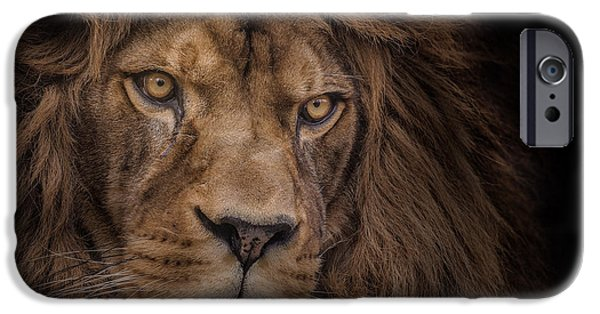 Lions Photographs iPhone Cases - Brink Of Extinction iPhone Case by Ashley Vincent