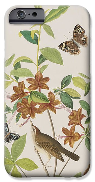 Insects Drawings iPhone Cases - Brown headed Worm eating Warbler iPhone Case by John James Audubon