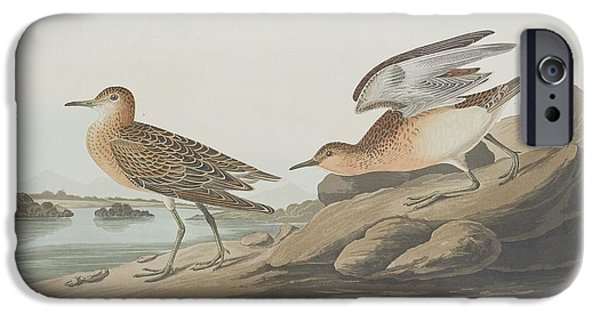 Seagull Drawings iPhone Cases - Buff-Breasted Sandpiper iPhone Case by John James Audubon