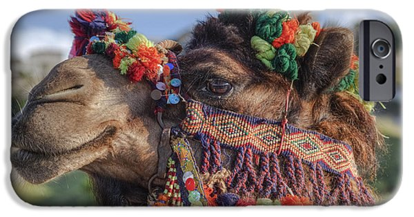 Camel Photographs iPhone Cases - Camel iPhone Case by Joana Kruse