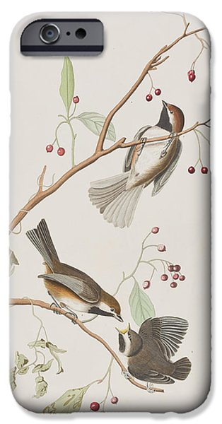 Berry iPhone Cases - Canadian Titmouse iPhone Case by John James Audubon