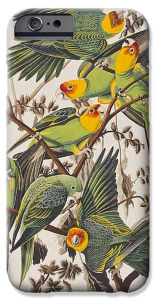 Parakeet iPhone Cases - Carolina Parrot iPhone Case by John James Audubon